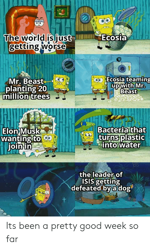 defeated: Ecosia  The world is just  getting worse  Ecosia teaming  Mr. Beast  planting 20  million trees  up with Mr.  Beast  Bacteria that  turns plastic  into water  Elon Musk  wanting to  join in  the leader of  ISIS getting  defeated by a dog Its been a pretty good week so far