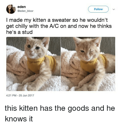 —˜: eden  @eden bloor  Follow  I made my kitten a sweater so he wouldn't  get chilly with the A/C on and now he thinks  he's a stud  4:21 PM 25 Jun 2017 this kitten has the goods and he knows it