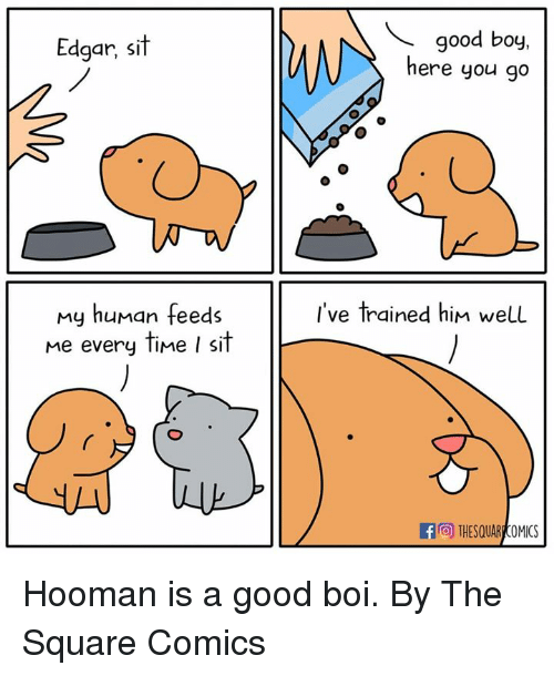 My Human: Edgar, sit  good boy,  here you go  I've trained him well  my human feeds  me every time I sit  THESQUAR COMICS Hooman is a good boi.  By The Square Comics