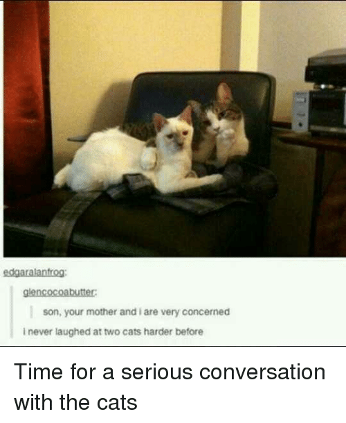 Cats, Time, and Never: edgaralantrog:  glencocoabutter  son, your mother and i are very concerned  i never laughed at two cats harder before Time for a serious conversation with the cats