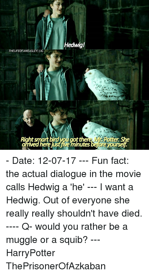 Dieded: edwig!  THELIFEOFAWEASLEYIIG  Right smart birdyou got th  ere just ive minutes bejore yoursel - Date: 12-07-17 --- Fun fact: the actual dialogue in the movie calls Hedwig a 'he' --- I want a Hedwig. Out of everyone she really really shouldn't have died. ---- Q- would you rather be a muggle or a squib? --- HarryPotter ThePrisonerOfAzkaban