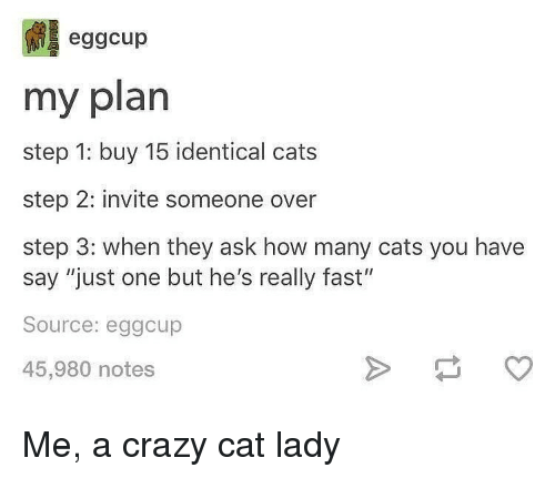 "Cats, Crazy, and Memes: eggcup  my plan  step 1: buy 15 identical cats  step 2: invite someone over  step 3: when they ask how many cats you have  say ""just one but he's really fast""  Source: eggcup  45,980 notes Me, a crazy cat lady"