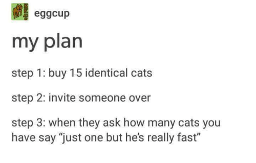 "Cats, Humans of Tumblr, and How: eggcup  my plan  step 1: buy 15 identical cats  step 2: invite someone over  step 3: when they ask how many cats you  have say ""just one but he's really fast"""
