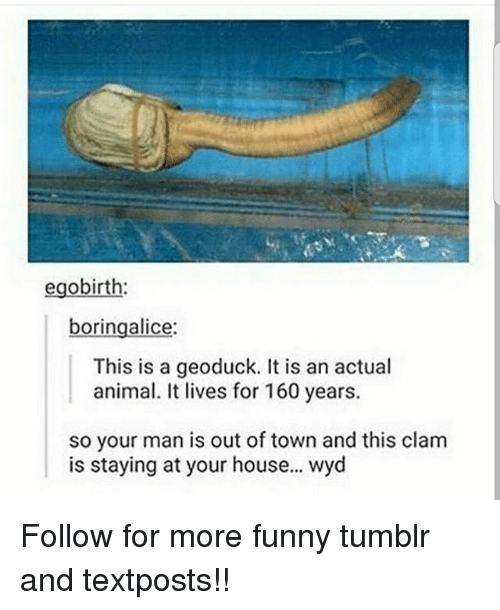 Funny Meme On Tumblr : Egobirth boringalice this is a geoduck it an actual