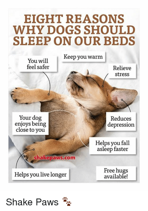 free hug: EIGHT REASONS  WHY DOGS SHOULD  SLEEP ON OUR BEDS  Keep you warm  You will  feel safer  Relieve  stress  Your dog  Reduces  enjoys being  depression  close to you  Helps you fall  asleep faster  Shake paws com  Free hugs  Helps you live longer  available! Shake Paws 🐾