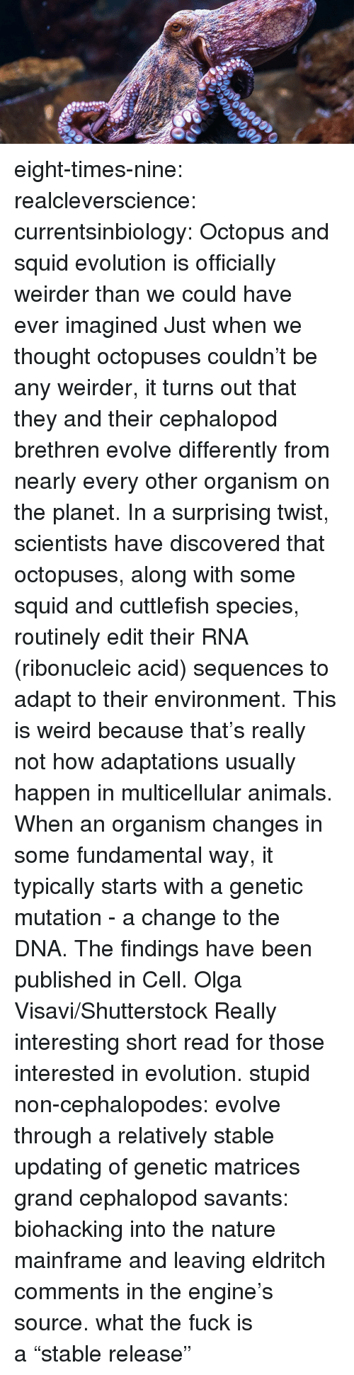 "organism: eight-times-nine: realcleverscience:  currentsinbiology:  Octopus and squid evolution is officially weirder than we could have ever imagined  Just when we thought octopuses couldn't be any weirder, it turns out that they and their cephalopod brethren evolve differently from nearly every other organism on the planet. In a surprising twist, scientists have discovered that octopuses,  along with some squid and cuttlefish species, routinely edit their RNA  (ribonucleic acid) sequences to adapt to their environment. This is weird because that's really not how adaptations usually  happen in multicellular animals. When an organism changes in some  fundamental way, it typically starts with a genetic mutation - a change  to the DNA.  The findings have been published in Cell.   Olga Visavi/Shutterstock     Really interesting short read for those interested in evolution.  stupid non-cephalopodes: evolve through a relatively stable updating of genetic matrices grand cephalopod savants: biohacking into the nature mainframe and leaving eldritch comments in the engine's source. what the fuck is a ""stable release"""