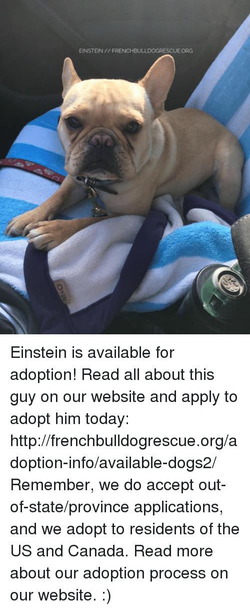 Memes, Canada, and Einstein: EINSTEIN FRENCHBULLDOGRESCUE ORG Einstein is available for adoption! Read all about this guy on our website <location, likes, dislikes> and apply to adopt him today: http://frenchbulldogrescue.org/adoption-info/available-dogs2/  Remember, we do accept out-of-state/province applications, and we adopt to residents of the US and Canada. Read more about our adoption process on our website. :)