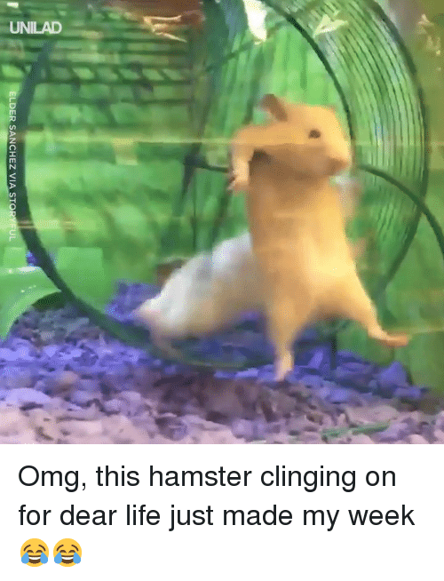Dank, Life, and Omg: ELDER SANCHEZ VIA STO  IL Omg, this hamster clinging on for dear life just made my week 😂😂