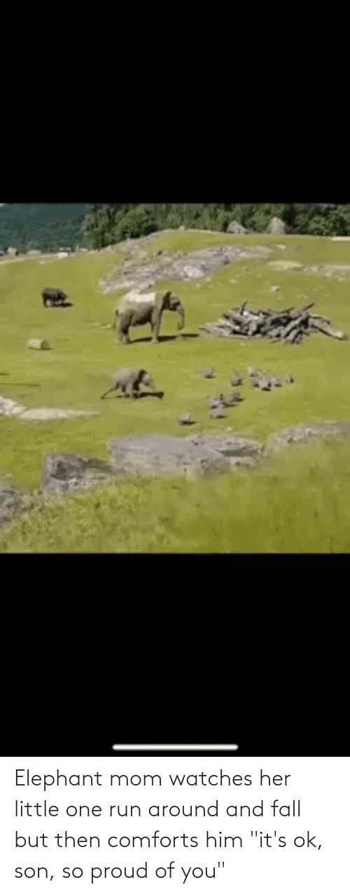 """So Proud Of You: Elephant mom watches her little one run around and fall but then comforts him """"it's ok, son, so proud of you"""""""
