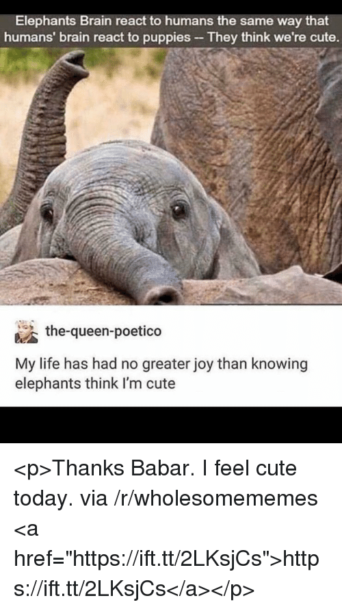 "Cute, Life, and Puppies: Elephants Brain react to humans the same way that  humans' brain react to puppies They think we're cute.  the-queen-poetico  My life has had no greater joy than knowing  elephants think I'm cute <p>Thanks Babar. I feel cute today. via /r/wholesomememes <a href=""https://ift.tt/2LKsjCs"">https://ift.tt/2LKsjCs</a></p>"