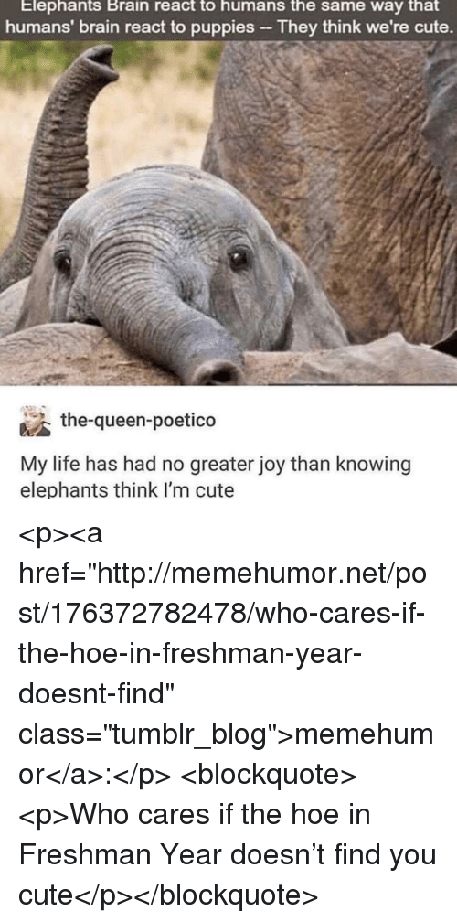 """Cute, Hoe, and Life: Elephants Brain react to humans the same way that  humans' brain react to puppies They think we're cute.  the-queen-poetico  My life has had no greater joy than knowing  elephants think l'm cute <p><a href=""""http://memehumor.net/post/176372782478/who-cares-if-the-hoe-in-freshman-year-doesnt-find"""" class=""""tumblr_blog"""">memehumor</a>:</p>  <blockquote><p>Who cares if the hoe in Freshman Year doesn't find you cute</p></blockquote>"""