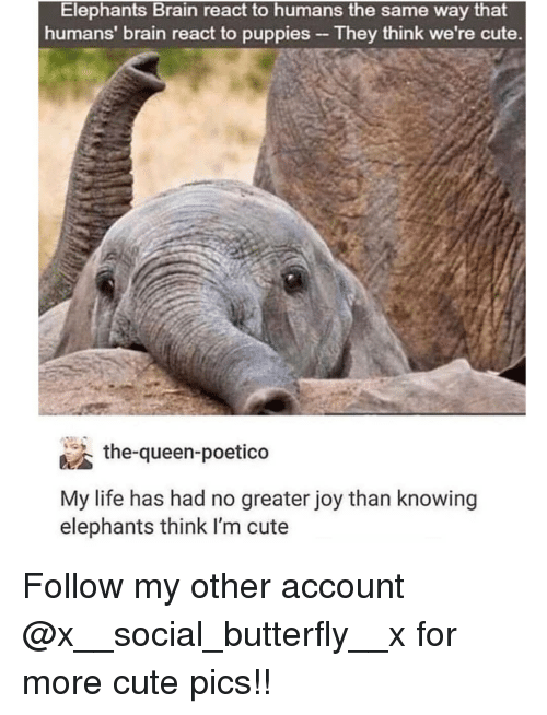 Cute, Life, and Memes: Elephants Brain react to humans the same way that  humans' brain react to puppies  -They think we're cute.  the-queen-poetico  My life has had no greater joy than knowing  elephants think I'm cute Follow my other account @x__social_butterfly__x for more cute pics!!
