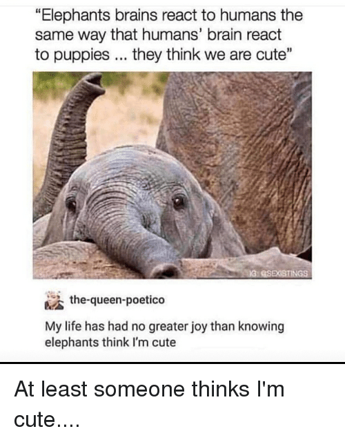 """Brains, Cute, and Funny: """"Elephants brains react to humans the  same way that humans' brain react  to puppies... they think we are cute""""  the-queen-poetico  My life has had no greater joy than knowing  elephants think I'm cute"""