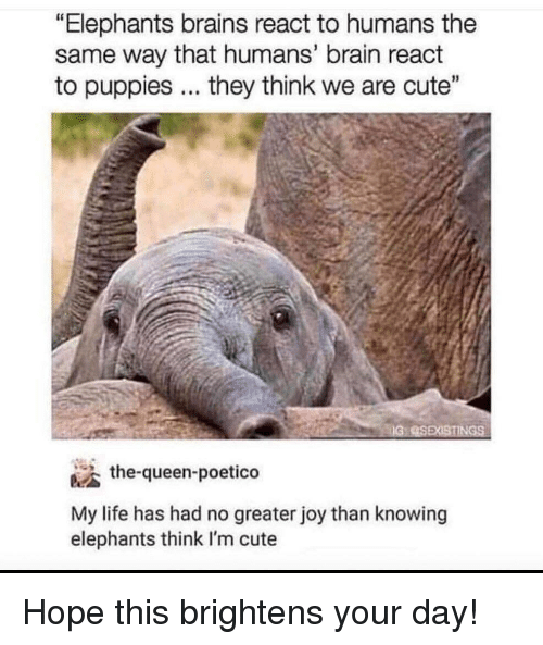 """Brains, Cute, and Life: """"Elephants brains react to humans the  same way that humans' brain react  to puppies... they think we are cute""""  the-queen-poetico  My life has had no greater joy than knowing  elephants think I'm cute Hope this brightens your day!"""