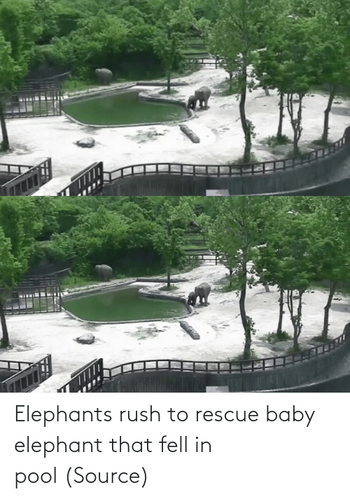 Elephant: Elephants rush to rescue baby elephant that fell in pool (Source)