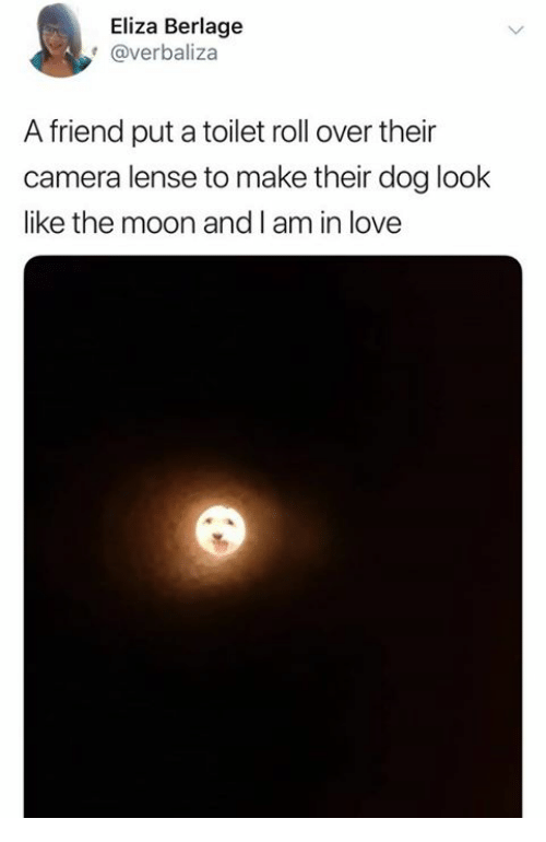 Love, Camera, and Moon: Eliza Berlage  @verbaliza  A friend put a toilet roll over their  camera lense to make their dog look  like the moon and I am in love