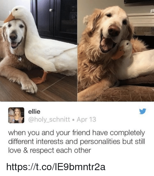 Love, Memes, and Respect: ellie  @holy_schnitt Apr 13  when you and your friend have completely  different interests and personalities but still  love & respect each other https://t.co/lE9bmntr2a