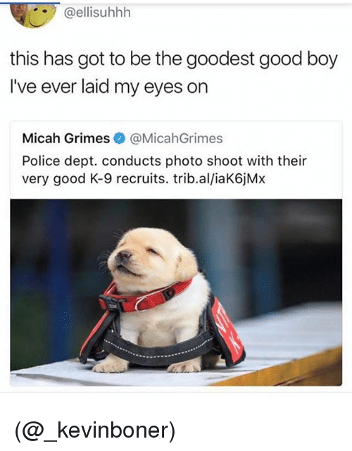 Funny, Meme, and Police: @ellisuhhh  this has got to be the goodest good boy  I've ever laid my eyes on  Micah Grimes@MicahGrimes  Police dept. conducts photo shoot with their  very good K-9 recruits. trib.al/iaK6jMx (@_kevinboner)