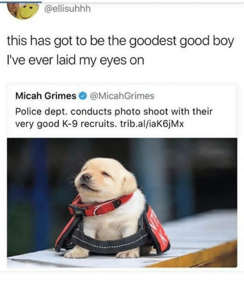 Memes, Police, and Good: @ellisuhhh  this has got to be the goodest good boy  I've ever laid my eyes on  Micah Grimes@MicahGrimes  Police dept. conducts photo shoot with their  very good K-9 recruits. trib.al/iaK6jMx