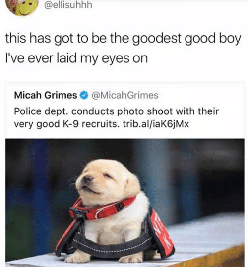Dank, Police, and Good: @ellisuhhh  this has got to be the goodest good boy  I've ever laid my eyes on  Micah Grimes@MicahGrimes  Police dept. conducts photo shoot with their  very good K-9 recruits. trib.al/iaK6jMx