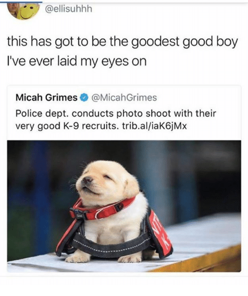 Dank, Police, and Good: @ellisuhhlh  this has got to be the goodest good boy  I've ever laid my eyes on  Micah Grimes@MicahGrimes  Police dept. conducts photo shoot with their  very good K-9 recruits. trib.al/iaK6jMx
