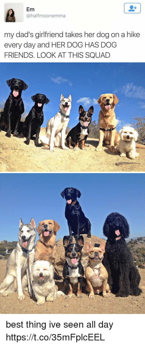 Friends, Memes, and Squad: Em  @halfmoonemma  my dad's girlfriend takes her dog on a hike  every day and HER DOG HAS DOG  FRIENDS. LOOK AT THIS SQUAD best thing ive seen all day https://t.co/35mFplcEEL