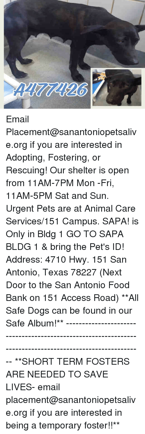 Dogs, Food, and Memes: Email Placement@sanantoniopetsalive.org if you are interested in Adopting, Fostering, or Rescuing!  Our shelter is open from 11AM-7PM Mon -Fri, 11AM-5PM Sat and Sun.  Urgent Pets are at Animal Care Services/151 Campus. SAPA! is Only in Bldg 1 GO TO SAPA BLDG 1 & bring the Pet's ID! Address: 4710 Hwy. 151 San Antonio, Texas 78227 (Next Door to the San Antonio Food Bank on 151 Access Road)  **All Safe Dogs can be found in our Safe Album!** ---------------------------------------------------------------------------------------------------------- **SHORT TERM FOSTERS ARE NEEDED TO SAVE LIVES- email placement@sanantoniopetsalive.org if you are interested in being a temporary foster!!**