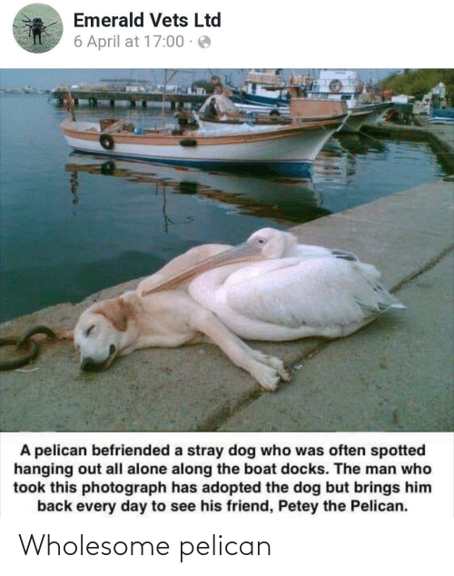 Spotted: Emerald Vets Ltd  6 April at 17:00 · e  A pelican befriended a stray dog who was often spotted  hanging out all alone along the boat docks. The man who  took this photograph has adopted the dog but brings him  back every day to see his friend, Petey the Pelican. Wholesome pelican