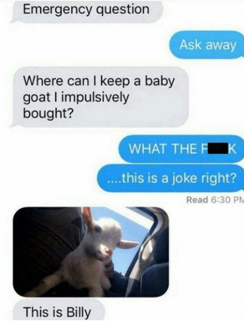 Goat, Humans of Tumblr, and Baby: Emergency question  Ask away  Where can I keep a baby  goat impulsively  bought?  WHAT THE F  ...this is a joke right?  Read 6:30 PM  This is Billy