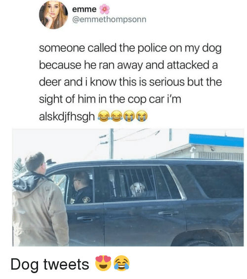 Deer, Memes, and Police: emme  @emmethompsonn  someone called the police on my dog  because he ran away and attacked a  deer and i know this is serious but the  sight of him in the cop car i'm  alskdjfhsgh Dog tweets 😍😂