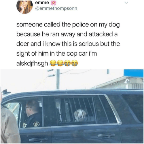 Deer, Police, and Dog: emme  @emmethompsonn  someone called the police on my dog  because he ran away and attacked a  deer and i know this is serious but the  sight of him in the cop car i'm  alskdjfhsgh
