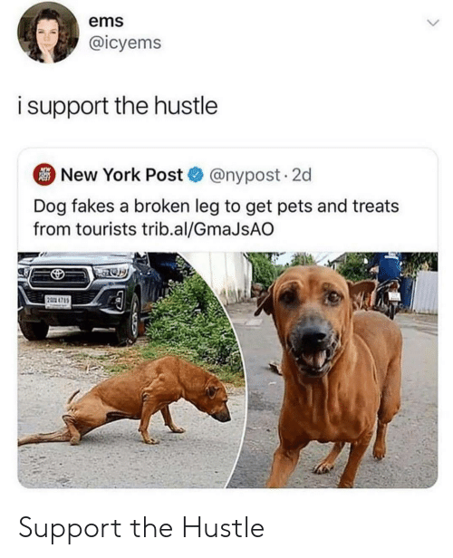 New York, New York Post, and Pets: ems  @icyems  isupport the hustle  New York Post@nypost. 2d  Dog fakes a broken leg to get pets and treats  from tourists trib.al/GmaJsAO  2 4785 Support the Hustle