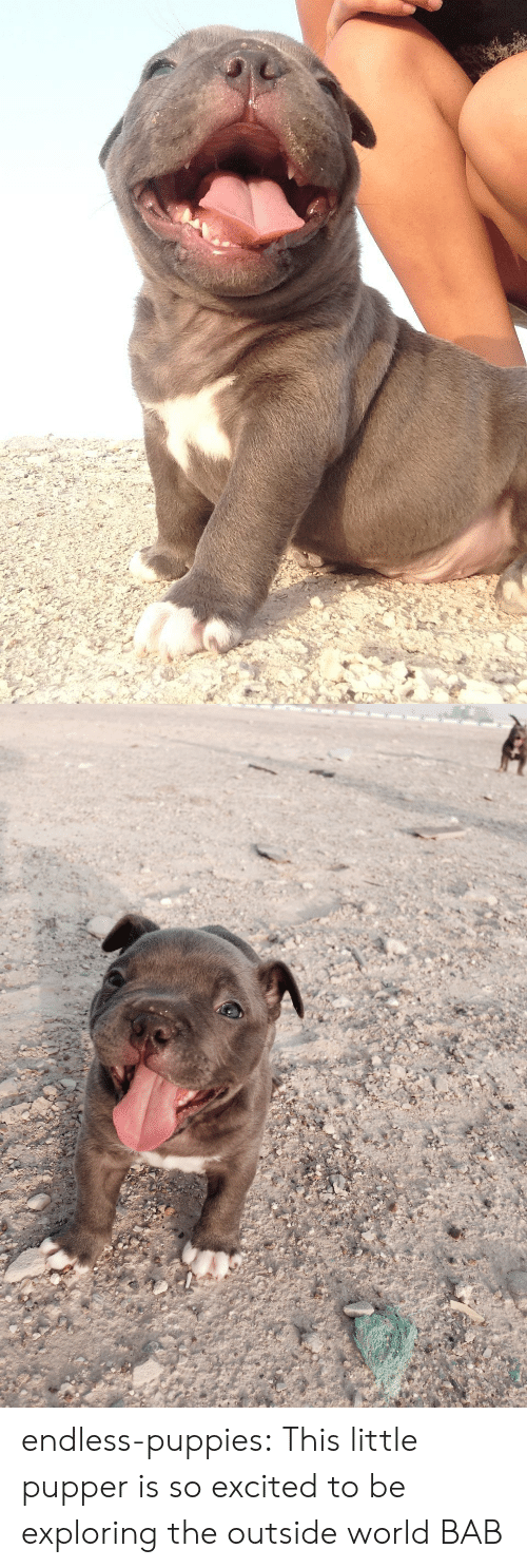Puppies: endless-puppies: This little pupper is so excited to be exploring the outside world  BAB