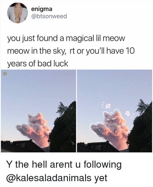 Bad, Memes, and Hell: enigma  @btsonweed  you just found a magical lil meow  meow in the sky, rt or you'll have 10  years of bad luck Y the hell arent u following @kalesaladanimals yet