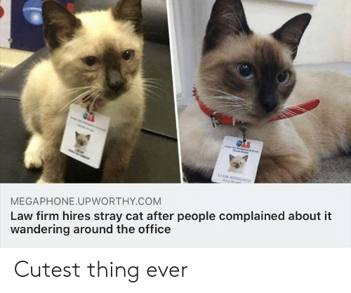 The Office, Office, and Cat: EON ADVOGATO  AL  Law firm hires stray cat after people complained about it  wandering around the office  MEGAPHONE.UPWORTHY.COM Cutest thing ever