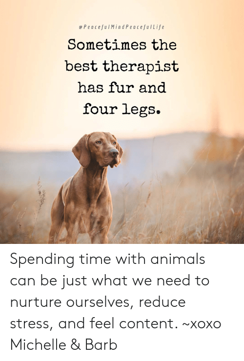 Animals, Memes, and Best: ePeacefulMindPeacefulLife  Sometimes the  best therapist  has fur and  four legs. Spending time with animals can be just what we need to nurture ourselves, reduce stress, and feel content. ~xoxo Michelle & Barb
