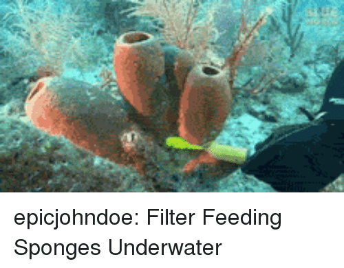 sponges: epicjohndoe:  Filter Feeding Sponges Underwater