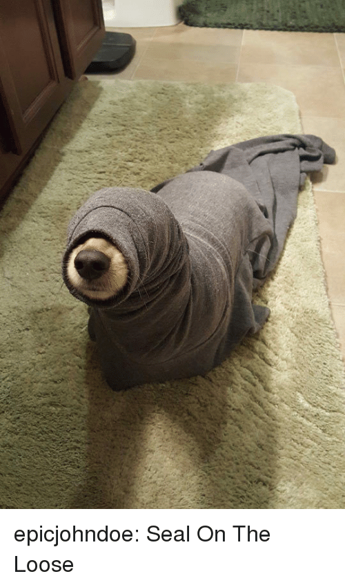Tumblr, Blog, and Seal: epicjohndoe:  Seal On The Loose