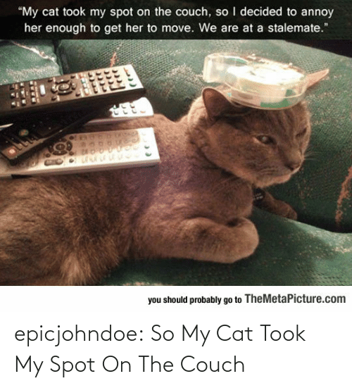 spot: epicjohndoe:  So My Cat Took My Spot On The Couch
