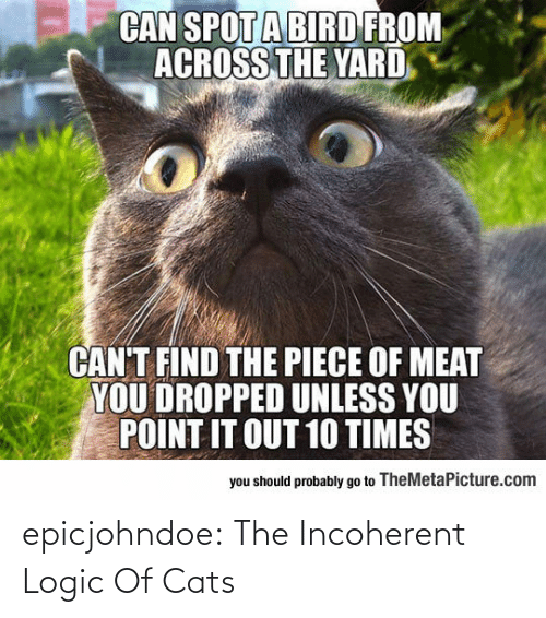 Cats: epicjohndoe:  The Incoherent Logic Of Cats