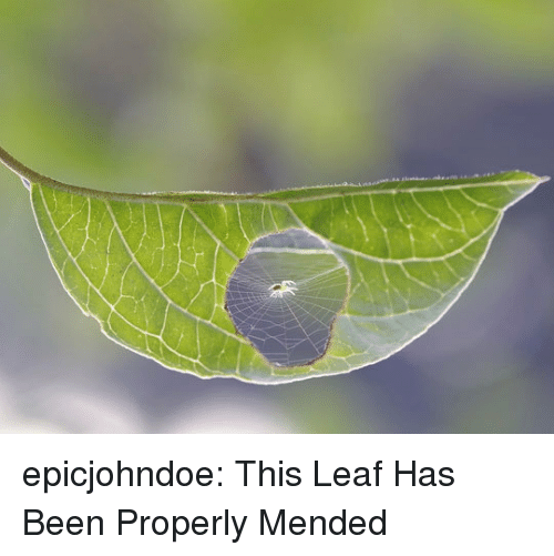 Tumblr, Blog, and Been: epicjohndoe:  This Leaf Has Been Properly Mended