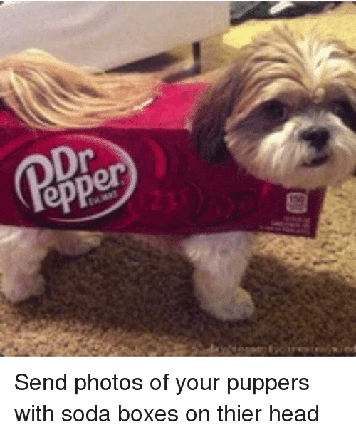 thier: epper Send photos of your puppers with soda boxes on thier head