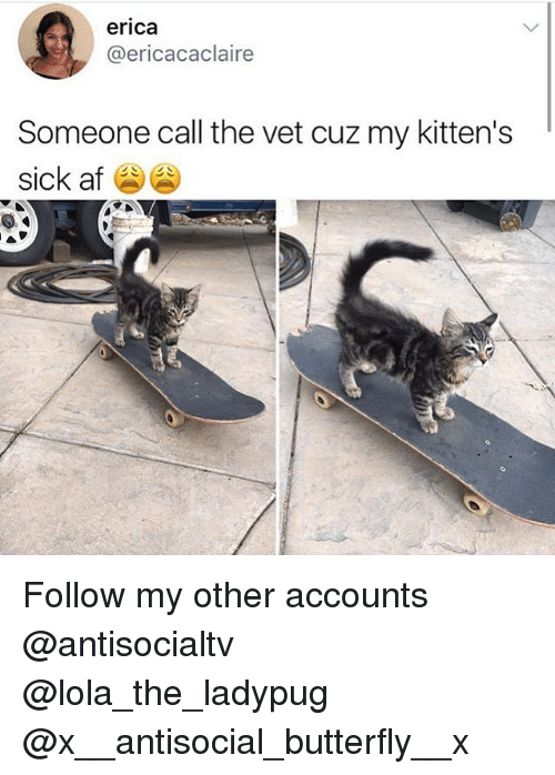 Af, Memes, and Butterfly: erica  @ericacaclaire  Someone call the vet cuz my kitten's  sick af Follow my other accounts @antisocialtv @lola_the_ladypug @x__antisocial_butterfly__x