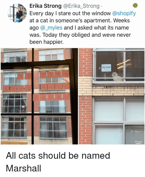 obliged: Erika Strong @Erika_Strong  Every day I stare out the window @shopify  at a cat in someone's apartment. Weeks  ago @_myles and I asked what its name  was. Today they obliged and weve never  been happier.  Marshall All cats should be named Marshall