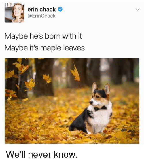 Chack: erin chack  @Erin Chack  Maybe he's born with it  Maybe it's maple leaves We'll never know.