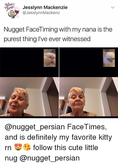 Cute, Definitely, and Memes: esimer Jesslynn Mackenzie  JesslynnMackenz  Nugget Face Timing with my nana is the  purest thing I've ever witnessed @nugget_persian FaceTimes, and is definitely my favorite kitty rn 😻😘 follow this cute little nug @nugget_persian