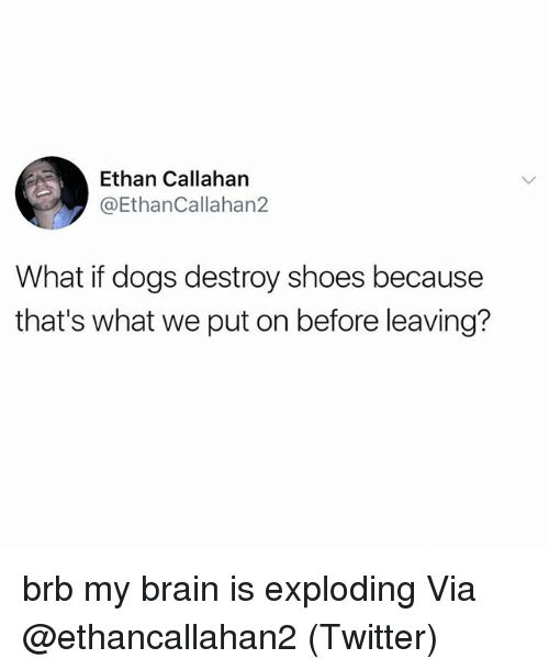 Dogs, Memes, and Shoes: Ethan Callahan  @EthanCallahan2  What if dogs destroy shoes because  that's what we put on before leaving? brb my brain is exploding Via @ethancallahan2 (Twitter)