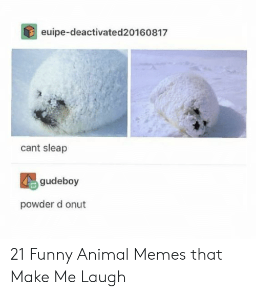 Funny, Memes, and Animal: euipe-deactivated20160817  cant sleap  gudeboy  powder d onut 21 Funny Animal Memes that Make Me Laugh
