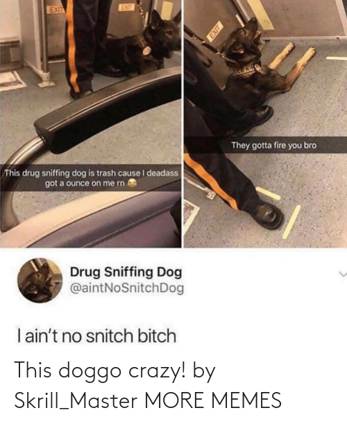 Drug: EUT  EXIT  They gotta fire you bro  This drug sniffing dog is trash cause I deadass  got a ounce on me rn  Drug Sniffing Dog  @aintNoSnitchDog  I ain't no snitch bitch This doggo crazy! by Skrill_Master MORE MEMES