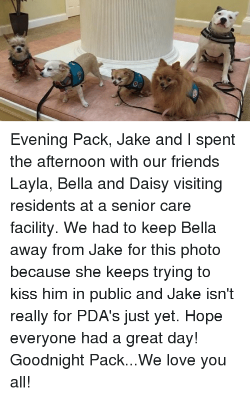 layla: Evening Pack, Jake and I spent the afternoon with our friends Layla, Bella and Daisy visiting residents at a senior care facility. We had to keep Bella away from Jake for this photo because she keeps trying to kiss him in public and Jake isn't really for PDA's just yet.  Hope everyone had a great day!  Goodnight Pack...We love you all!